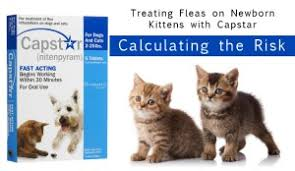 treating fleas on newborn kittens with capstar calculating the risk canadapetcare canadapetcare