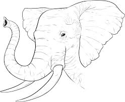 Small Picture 14 Elephant Face Coloring Pages Animals printable coloring pages