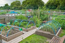 Gallery Of Vegetable Garden Design Layout Pictures Ideas Trends ...