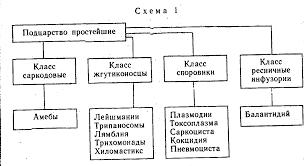 Реферат Класс жгутиковые лейшмании трихомонады лямблии  Класс жгутиковые лейшмании трихомонады лямблии трипаносомы