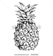 pineapple drawing. image of pineapple fruit. vector black and white illustration. drawing