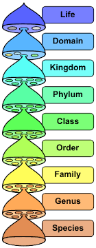 Classification Of Microorganisms Boundless Microbiology
