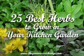 best-herbs-kitchen-garden