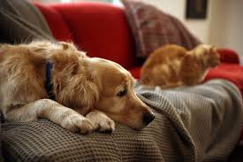 in home euthanasia for pets