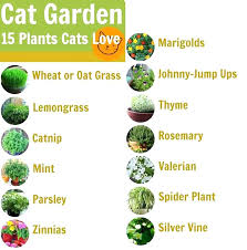 plants that are not toxic to cats non toxic indoor plants cat safe house plants for