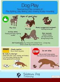 German Shepherd Dog Training Tips In Hindi Pdf And Pics Of