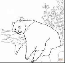 Small Picture unbelievable panda bear coloring pages with panda coloring page