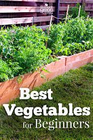beginner gardening. The Best Vegetables For Beginners Beginner Gardening N