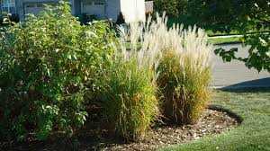 Small Picture Exterior Design Appealing Paint Mexican Feather Grass For