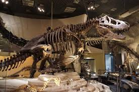 「国立科学博物館」の画像検索結果