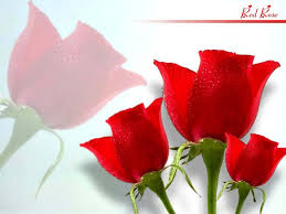 top beautiful flowers rose red roses flower wallpaper and images top beautiful red rose hd wallpapers free s
