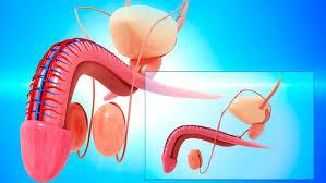 prostatakrebs blut im urin