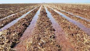 soil key to solving the food crisis the why files enlarge