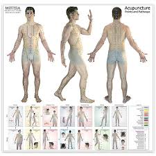 Acupuncture Wall Charts Download The Ultimate Acupuncture Wall Chart