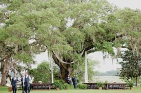 ceremony site is set up under oak tree old wide awake plantation charleston