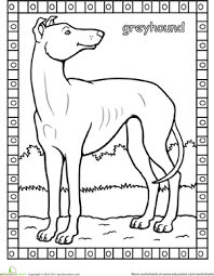 Small Picture Greyhound Worksheet Educationcom