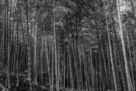 竹林に関する写真写真素材なら写真ac無料フリーダウンロードok