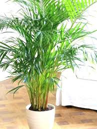 indoor low light plants best low light plants best low light houseplants ideas on indoor plants