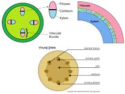 big tex dump trailer wiring diagram big wiring diagrams database phloem and xylem function