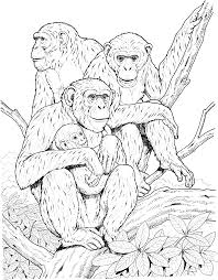Small Picture Primate Coloring Pages