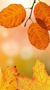 Autumn Leaves Wallpaper - iPhone ...