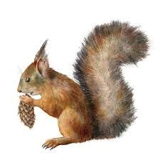 56 Eurasian Red Squirrel Illustrations Illustrations, Royalty-Free Vector  Graphics & Clip Art - iStock