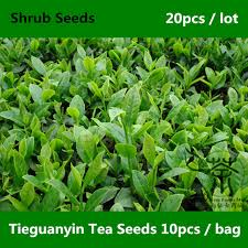 Image result for tieguanyin