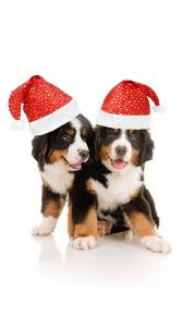 christmas puppies wallpaper. Fine Puppies Christmas Puppies Wallpaper To E