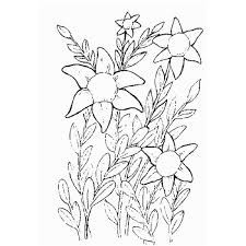 Springtime Spotlight Five Free Sites With Flower Coloring Sheets
