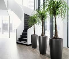 View in gallery Indoor tropical potted plants