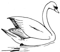 Small Picture Free Swan Coloring Pages 2 Swan Artill Pinterest Swans