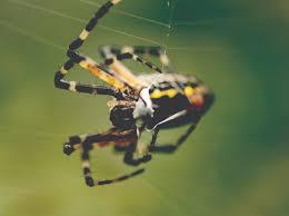 close up garden spider spinning web