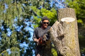 25,687 Tree service Stock Photos | Free & Royalty-free Tree service Images  | Depositphotos