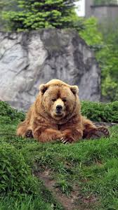 Best 20 Bear face ideas on Pinterest