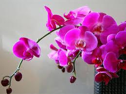 <b>Удобрение для орхидей</b> для цветения - 10 лучших удобрений!