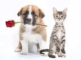 puppy and kitten cuddling. Plain Kitten Animal Center Offers Rose Kitten Or Puppy And A Card In  To Puppy And Kitten Cuddling I