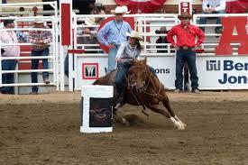 horse insurance quotes raipurnews