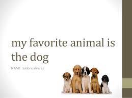 favorite dog essay my favorite dog essay