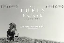 Image result for images of turin horse