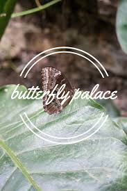 butterfly palace photo essay a girl and her passporta girl and  butterfly palace