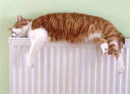 """Résultat de recherche d'images pour """"gato com frio gif"""""""