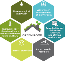 green roof favela profile