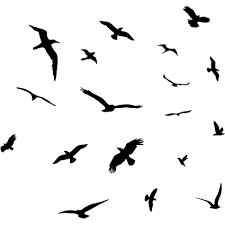 birds flying. Perfect Flying VWAQ Flock Of Birds Flying Wall Decals Stickers Peel And Stick Art For Amazoncom