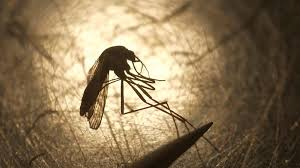 Mosquitoes test positive for Triple E virus in 7 Connecticut tow