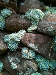 Small Picture Best 25 Succulent rock garden ideas only on Pinterest Succulent