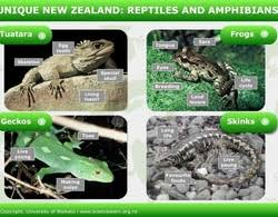 Difference Between Amphibians And Reptiles Venn Diagram Reptiles And Amphibians Science Learning Hub