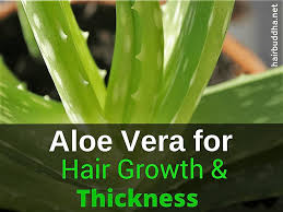 aloe vera for hair growth and glowing skin