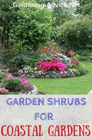 garden shrubs for coastal areas