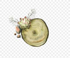 Download Paper Download Tree Stump Paper Png 3518x2940px Tree Stump