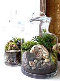 Ammonite Fossil Terrarium - Snail Shell Prehistoric Plant in Glass Jar -  Jurassic Collectible Fossil Display